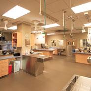 Animal Hospital Treatment Room