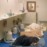 Veterinary Hospital Recovery Room