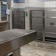 Emergency Veterinary Hospital ICU