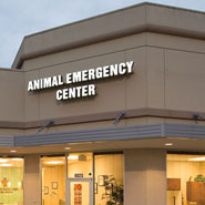 Critical Care Veterinary Architecture