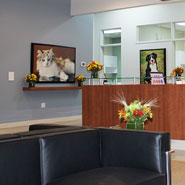 24-Hour Veterinary Hospital Waiting Room