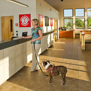 Emergency Animal Clinic Reception