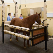 Veterinary Horse Stock