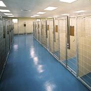 Animal Shelter Canine Housing