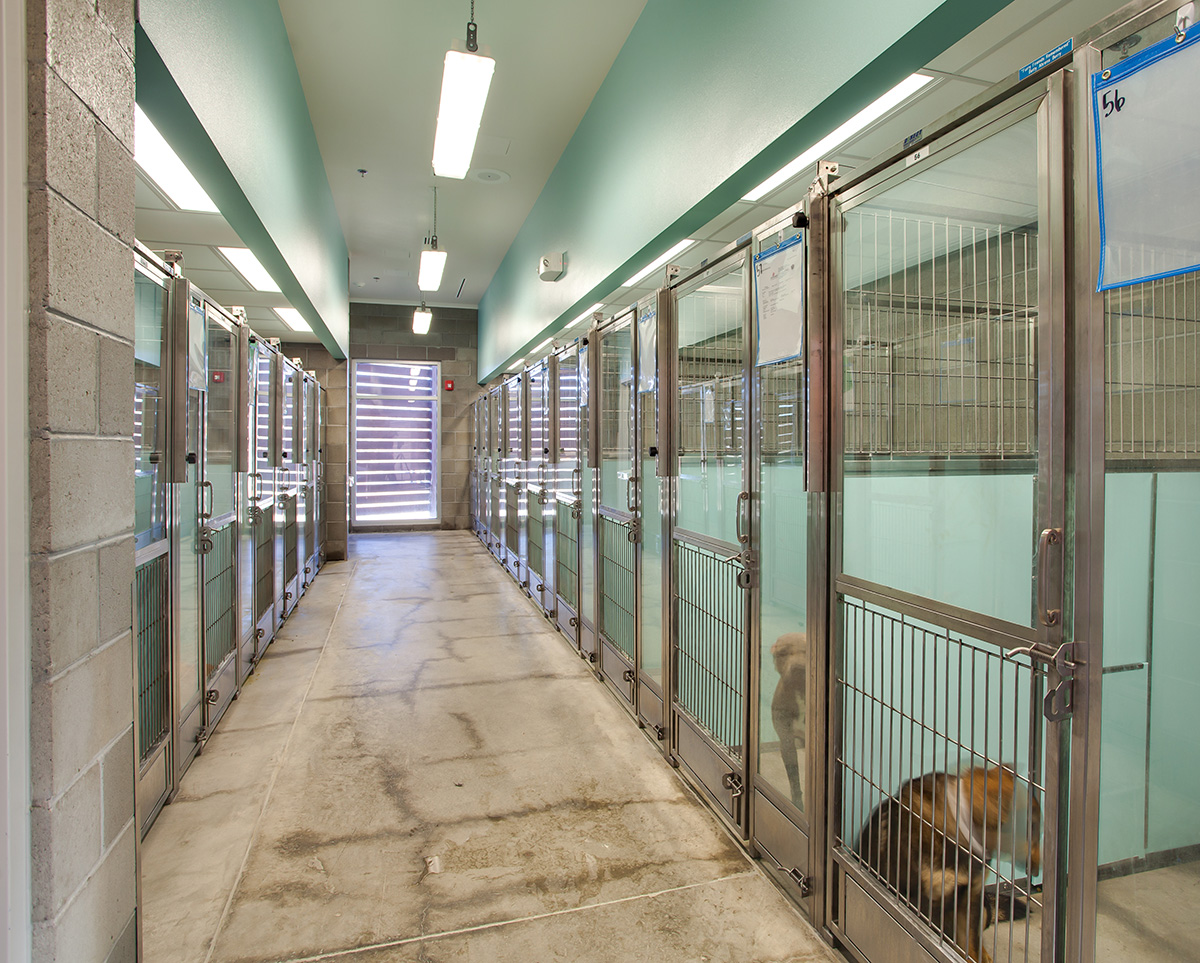 Bda Architecture Animal Shelters