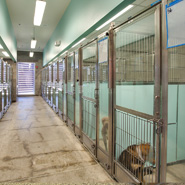 Animal Adoption Housing