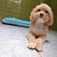 Luxury Dog Suite