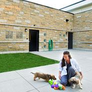 Dog Exercise Yard