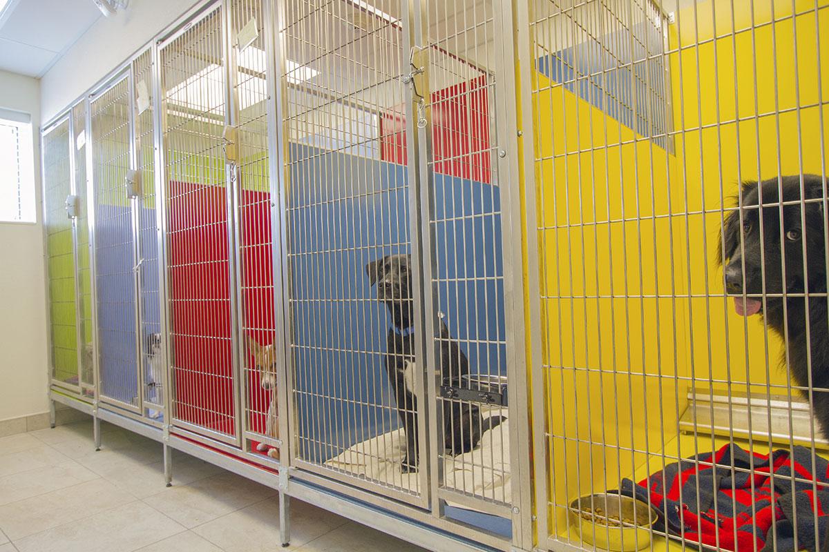 Dog boarding facility business plan
