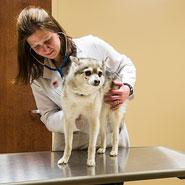 Veterinary Exam Room