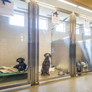 Dog Housing in Veterinary Hospital