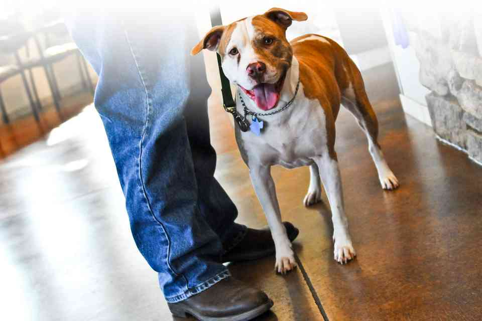 Photo of Canine in Veterinary Waiting Room